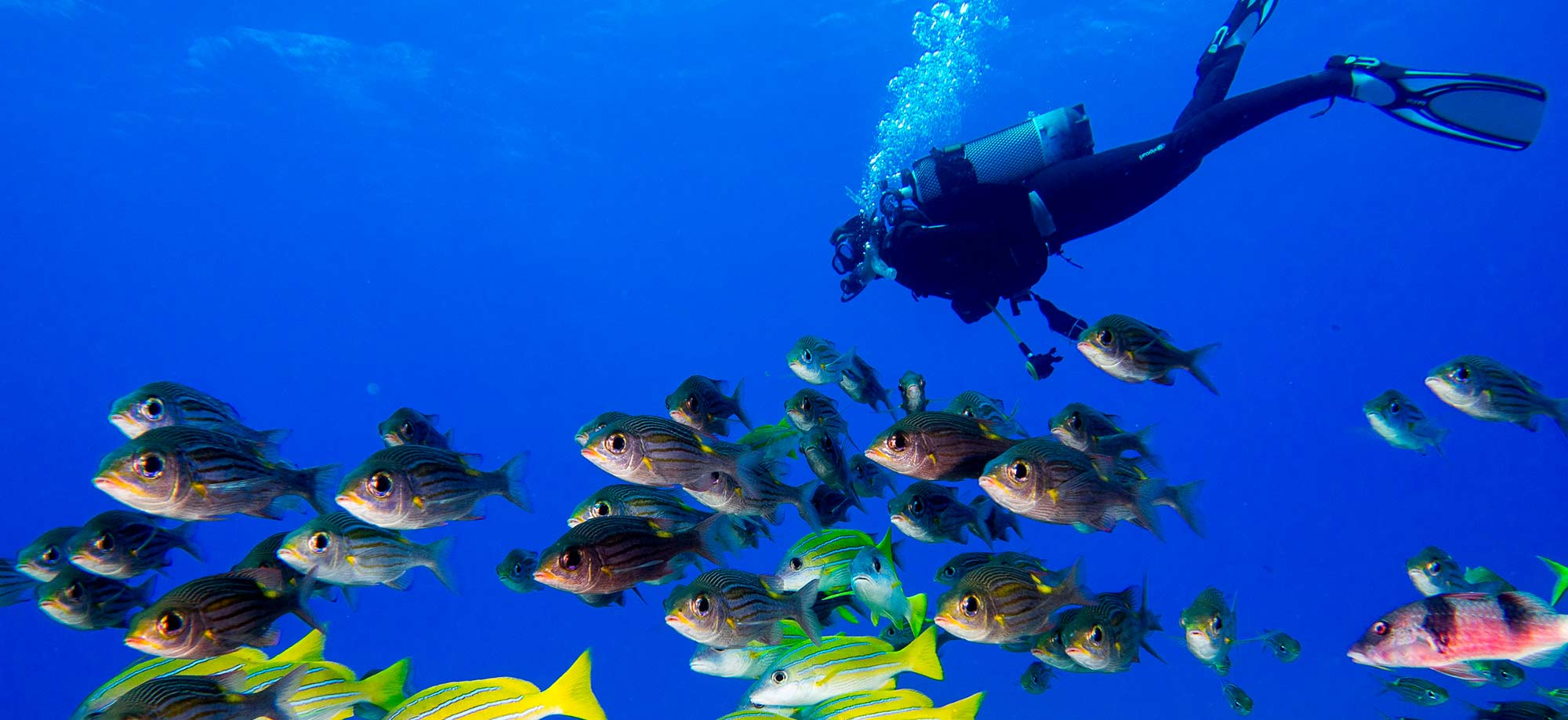 SCUBA Dive Australia's tropical islands